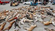 वीडियो: कुत्तों का कब्रिस्तान बना कराची