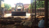 जयपुर: गोशाला में गायों की मौत पर गरमाई सियासत, कांग्रेस ने निकाली गोरक्षा रैली