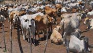 अब आंध्र में गोरक्षकों की गुंडागर्दी, मरी गाय की खाल निकालने पर दो दलितों की पिटाई