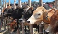 RSS Muslim arm to distribute cow milk at iftar in Lucknow's Chhota Imambara