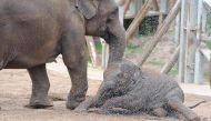 विश्व हाथी दिवस के लिए अभिनेता नील की अपील, 'ना करें हाथी की सवारी'