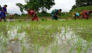बिहार: केड़िया गांव के किसानों की मदद के लिए आगे आईं बॉलीवुड हस्तियां