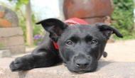 कोल्ड ड्रिंक का दीवाना कुत्ता रोज पीता था एक कोका कोला, गिर गए सारे दांत