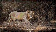 मध्य प्रदेश 23 साल से शेर मांग रहा है, मंत्रीजी कह रहे हैं किसी ने मांगा ही नहीं