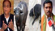 नेताओं के ही जानवर ढूंढ़ती है यूपी पुलिस, आम आदमी के नहीं!
