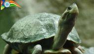 स्वतंत्रता दिवस: देश में विलुप्त हो रही 15 प्रजातियां