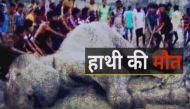वीडियोः लाख कोशिशों के बावजूद भी नहीं बच सका बाढ़ में बहा हाथी 'बंगबहादुर'