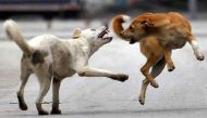 केरल में आवारा कुत्तों ने महिला को काट-काटकर जान से मारा