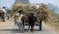 गन्ना किसानों को मोदी सरकार का तोहफा, शुगर मिलों के लिए 8500 करोड़ मंजूर