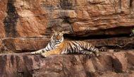 वन्यजीव संरक्षण अधिनियम-2016: शिकारियों की मुश्किल और उद्यमियों की सहूलियत