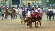 पोला पर्व पर रायपुर में बैल-दौड़ प्रतियोगता