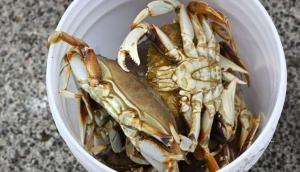 New species of freshwater crab found in Arunachal Pradesh