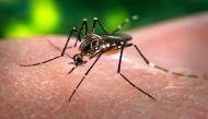 जानिए डेंगू और चिकनगुनिया बीमारी के लक्षण और बचाव के उपाय