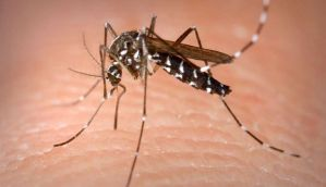Delhi has been hit by a chikungunya epidemic - what is this disease?