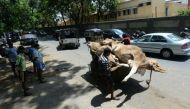 गुजरात में पशु कंकाल फेंकने से इनकार, दलित परिवार की पिटाई