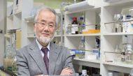 जापान के चिकित्सक योशिनोरी ओहसुमी हुए नोबेल के लिए चयनित