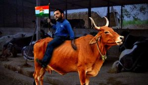 Gai pe charcha: when Rahul Gandhi decided to spend a night  with a cow