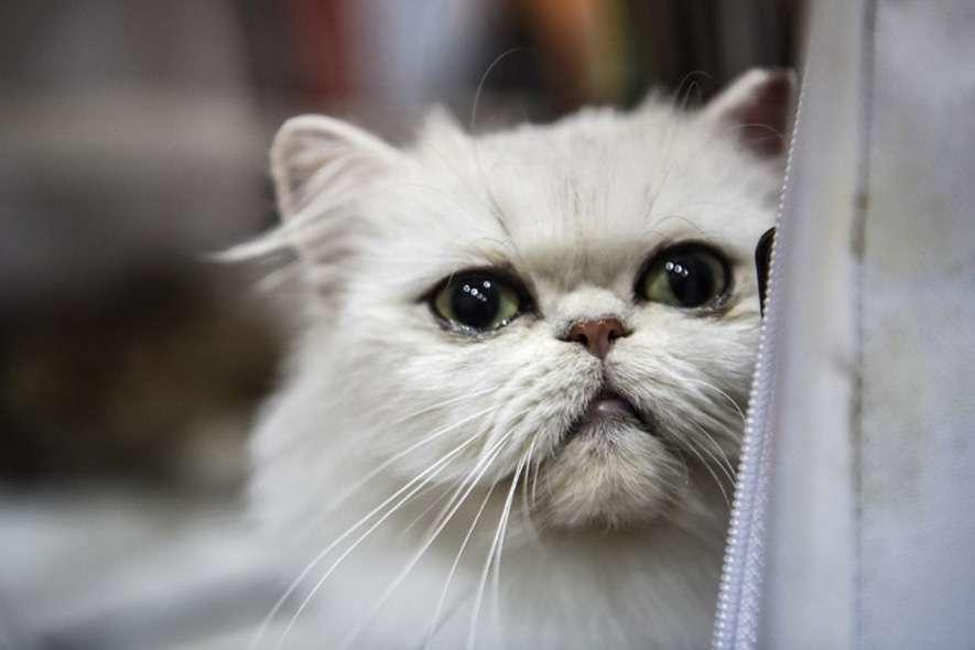 /cat-show-8