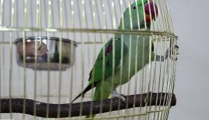 Kiss and squawk: A parrot in Kuwait just exposed a cheating husband