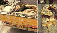 इंसान बना जानवर: आवारा कुत्तों के हमले में बुजुर्ग की मौत, 90 कुत्तों की पीट-पीटकर हत्या