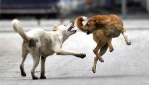 केरल: आवारा कुत्तों को मारने पर अब मिलेगा सोने का सिक्का