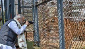 रायपुर के जंगल सफारी में पीएम मोदी, ट्विटर पर टिप्पणी- 'शेर का शेर से मिलन!'