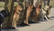 India and Nepal bond over dog training, Bengal offers its help