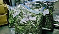 Hyderabad: 5 drug smugglers held, 50 kg marijuana seized