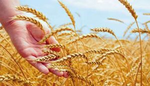 Not everyone loves wheat - so why not remove the bad bits