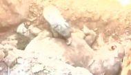 असम: रामदेव के हर्बल पार्क के गढ्ढे में गिरने से हाथी की मौत, FIR दर्ज