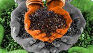 ज्वार-बाजरे की खेती करने वाली महिला किसानों का 'मिलेट नेटवर्क'