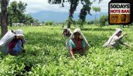 बंगाल के चाय बाग़ान मज़दूर: कैश की कमी से राहत, पर कैशलेस नहीं हुए