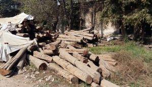 नोटबंदी: छत्तीसगढ़ टिम्बर कारोबार पर भारी मार, 80 फीसदी तक गिरावट