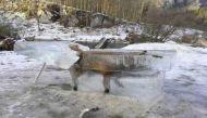 ठंड का कहर, नदी में गिरकर जम गर्इ लोमड़ी...तस्वीरें सोशल मीडिया पर वायरल