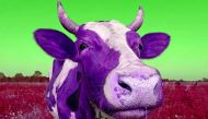 Moos your daddy and other ways the Indian cow is magical