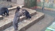 चिड़ियाघर में जानवरों की हालत देख आपके रोंगटे खड़े हो जाएंगे, देखें वीडियो
