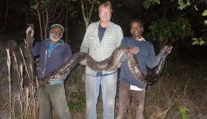 अमेरिका: फ्लोरिडा में अजगरों को पकड़ने के लिए भारत से बुलाए गए सपेरे