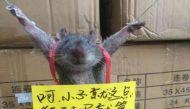 सोशल मीडिया पर चावल चुराने वाले चूहे की तस्वीर हुर्इ वायरल