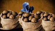 आलू की बंपर पैदावार से पंजाब के किसान परेशान, नहीं मिल रहे ख़रीददार