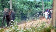 Trapped elephants face attacks by mob in India