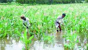 Shiv Sena drops out of crop loan waiver agitation, no scope of no-confidence in Maha Assembly now