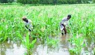 Tamil Nadu: No assurance from Centre on farm loan waiver