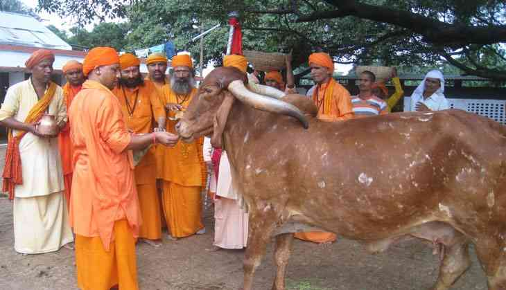 Yogic logic: When a CM's priority is cows not people, we have a problem