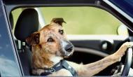 भाई-बहन ने अपनी जान देकर कुत्ते को दिया जीवनदान