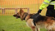 इस परिवार के लिए फरिश्ता बन गया वफादार कुत्ता, ऐसे बचा ली पूरे परिवार की जान