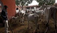 गौ-टैक्स और 'आज़ादी आंदोलन': गाय की राजनीति के लिए भाजपा के नए औजार
