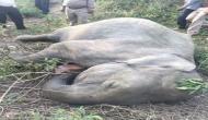 पानी की तलाश में निकले दो हाथियों की रानीखेत एक्सप्रेस ने ली जान