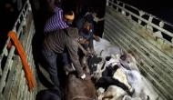 Centre for providing UID to each cow across Indo-Bangla border
