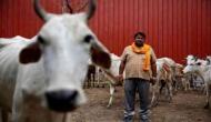 योगी: गोमाता की जय बोलने से नहीं होगा गायों का संरक्षण