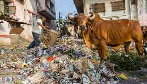 To counter BJP's cow narrative, Gujarat Dalits demand Aadhar for bovines